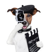 Movie director dog — Stock Photo