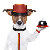 Bellboy dog — Stockfoto