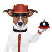 Perro de botones — Foto de Stock