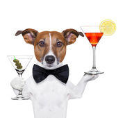 Cocktail dog martini glasses — Stock Photo