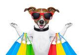 Winkelen hond — Stockfoto