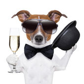 Cheers dog — Stock Photo