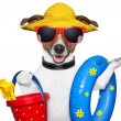 Summer beach dog — Stock Photo