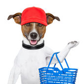 Cane dello shopping — Foto Stock