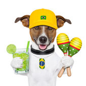 Funny dog brazil — Stock Photo