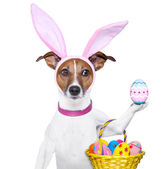 Funny easter dog — Stock Photo