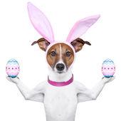 Grappige pasen hond — Stockfoto