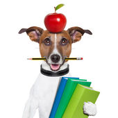 School hond — Stockfoto