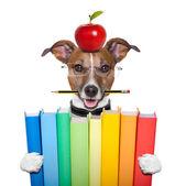 Perro y libros — Foto de Stock