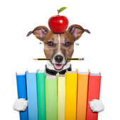 Dog and books — Stock Photo