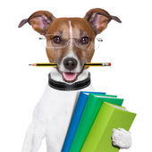 School dog — Stock Photo