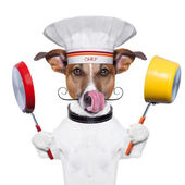 Chef cuoco cane — Foto Stock