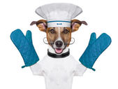 Chef cuisinier chien — Photo