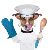 Dog cook chef — Stock Photo