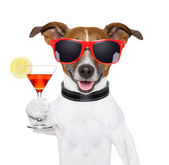 Funny cocktail dog — Stock Photo