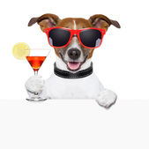 Funny cocktail dog banner — Stock Photo