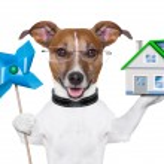 Banner dog — Stock Photo #23600475