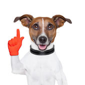 Hund-idee — Stockfoto