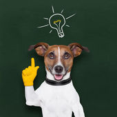 Köpek fikir — Stok fotoğraf