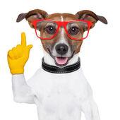 Smart school dog — Stock Photo
