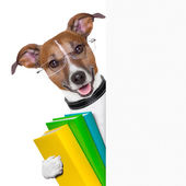 School dog banner — Stock Photo