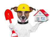 Home dog builder — Stock Photo