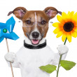 Eco energy dog — Stock Photo