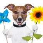 Eco energy dog — Stock Photo #24086023