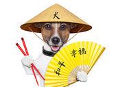 Asian dog — Stock Photo