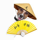 Asian dogs — Stock Photo