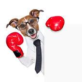 Perro del boxeo — Foto de Stock