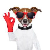 Ok fingers dog — Stock Photo