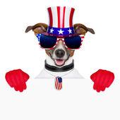 Usa american dog — Stock Photo
