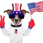 Постер, плакат: Usa american dog