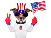 美国美国狗 — 图库照片