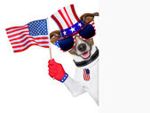 Usa american dog — Stock fotografie