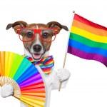 ������, ������: Gay pride dog