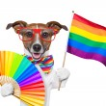 Gay pride dog — Stock Photo #24777447