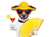 Summer cocktail dog — Foto de Stock