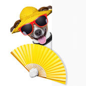 Summer cocktail dog — Stock Photo