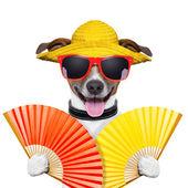собаки летом — Стоковое фото