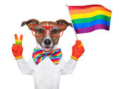 Gay pride dog — Stock Photo