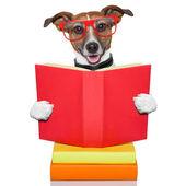 School learing dog — Stock Photo