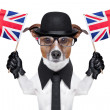 British dog - Foto Stock