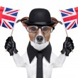 British dog - Stock Photo