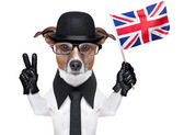 British dog banner — Stock Photo