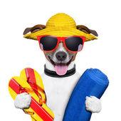 Lato plaża pies — Zdjęcie stockowe