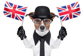 British dog — Stock Photo