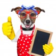 Housewife dog — Stock Photo