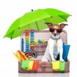 Summer holiday dog — Stock Photo